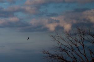 bird-in_flight-