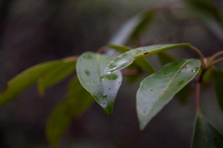 rain_drop-1