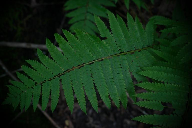 greenleaf (1 of 1)